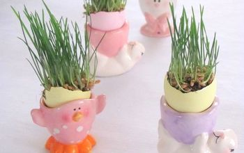 How to Grow Wheat Grass for Easter