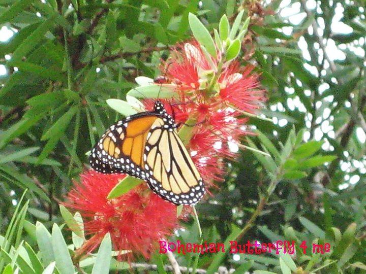 Butterflies love them as much as I do. :-)