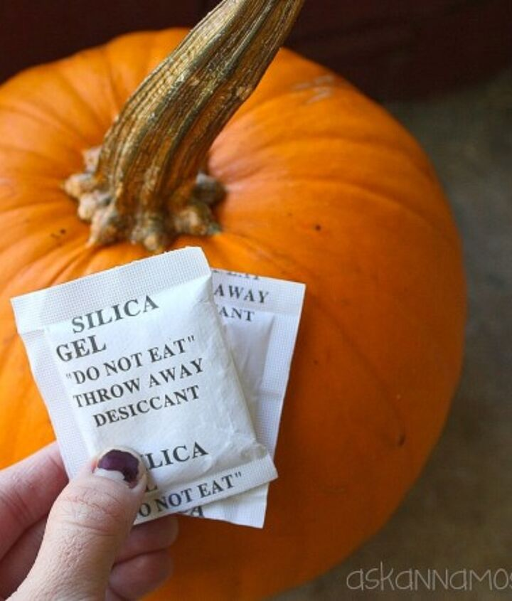 how to keep a pumpkin from molding, gardening