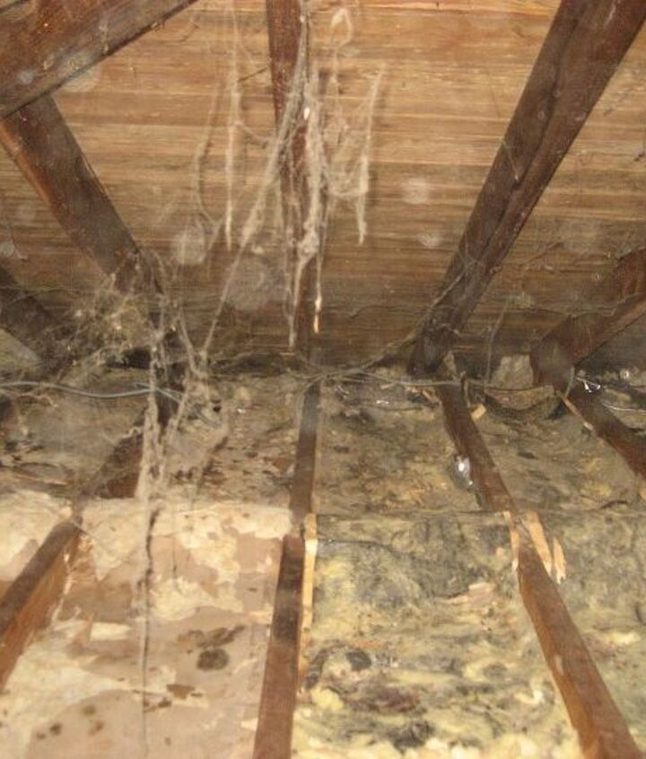 What is shown here is the paper that is left after the animals chewed off all the insulation just leaving the paper backing.