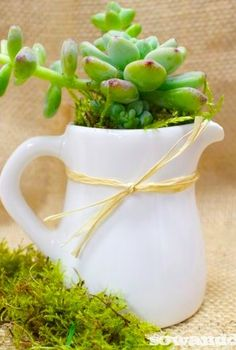 seashells and succulents, flowers, gardening, succulents
