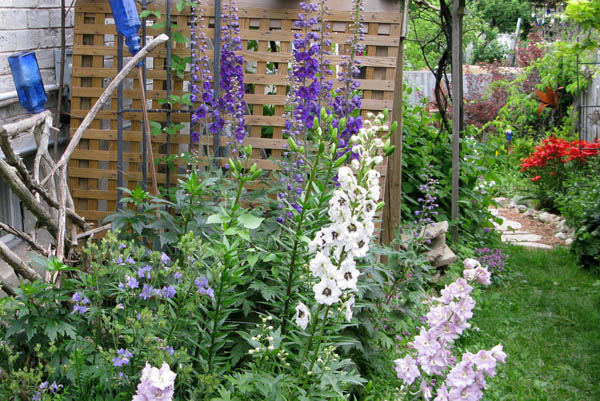 http://www.empressofdirt.net/delphiniums/ They come in many colours.