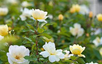 yes there are flowering shrubs that bloom in summer, flowers, gardening, landscape, outdoor living
