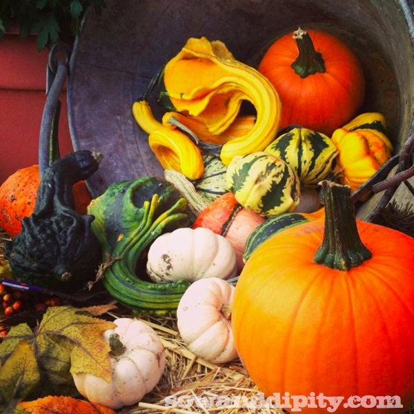 I'm in love with gourds this year, even planted in them, see: http://www.hometalk.com/2357871/gourds-as-fall-planters