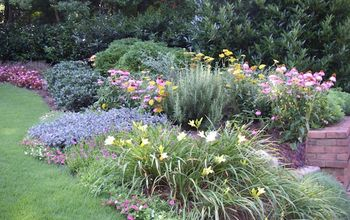 Perennials add pizazz to small front yard, Marietta, GA, metro Atlanta