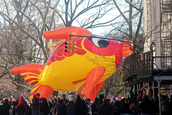 """An unidentified fish """"marches"""" (swims out of water) in Macy's 2013 Thanksgiving Parade. View Five (at CPW). Image featured @  https://www.facebook.com/media/set/?set=a.582320998483944.1073741851.247917655257615&type=1"""