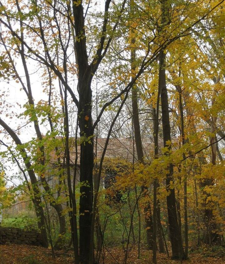 A few more beautiful trees.
