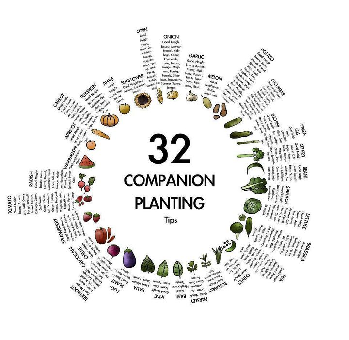 companion plants to compliment each other in your vegetable garden, gardening