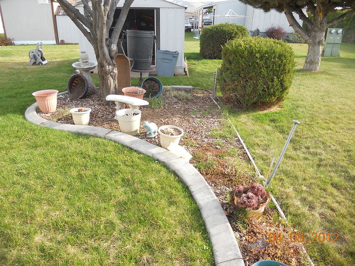 q help with my little garden, flowers, gardening, I just dont know whether to keep this or tear out the cement curb and put sod in I get overwhelmed with grass growing in Weeds i can handle grass is everywhere Krauter plum in background