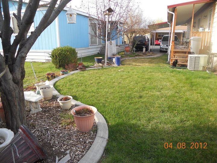 q help with my little garden, flowers, gardening, From the plum tree looking toward our house blue is neighbors bahhumbug