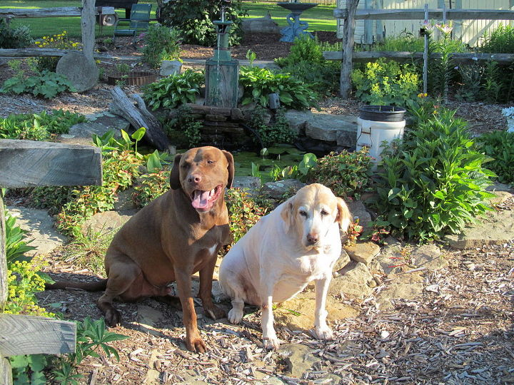 Cookie and Buster visiting the garden pond