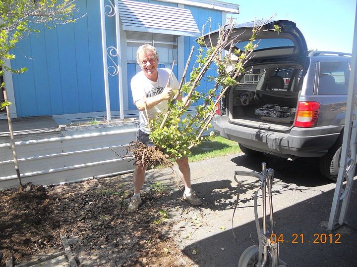 q posting my little garden help new thread, gardening, haha taking out the man tree snicker