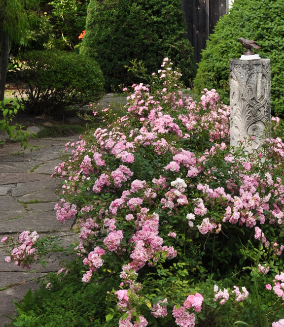 There is courtyard filled with pretty pink roses at the front of this country home.