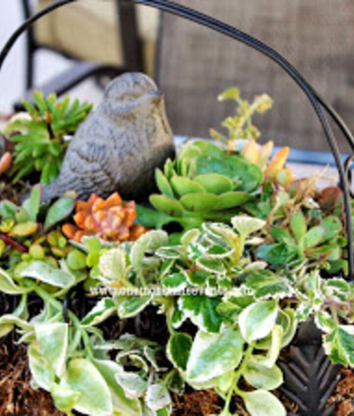 Outdoor patio table centerpiece with succulents clippings from other succulents from the yard