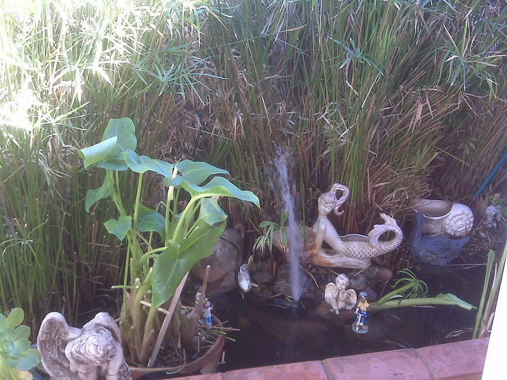 This is how it used to look!!!! It is overgrown, need to weed out, restore my waterfall, however whenever I fill up the pond it is empty the next day!