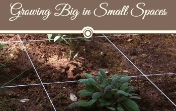 square foot gardening growing big in small spaces, gardening, raised garden beds
