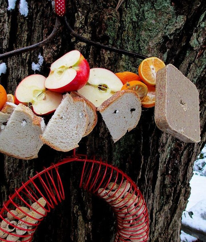 Close-up of the bird feeding station  http://pinterest.com/barbrosen/