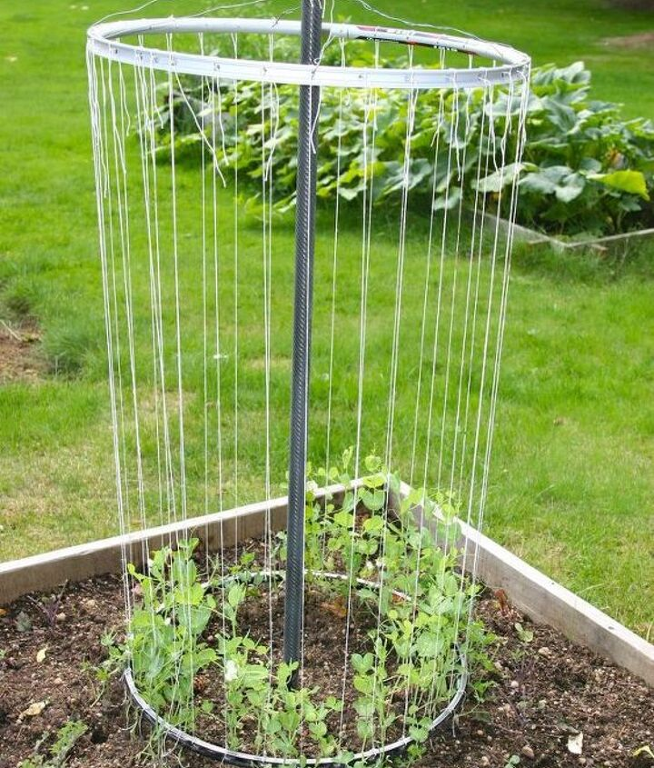 here is a photo from another blogger who made one from bike rims. peas already growing!