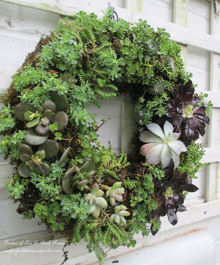 diy project make your own succulent wreath, crafts, flowers, gardening, succulents, wreaths, Completed Succulent Wreath