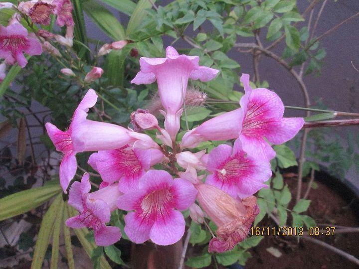 flower indentification, flowers, gardening