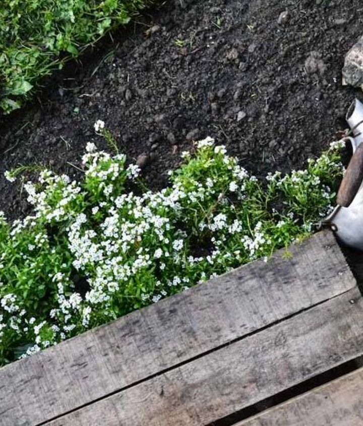 My favourite part is where the old kettle is tipped, appearing to have spilled all that fragrant alyssum.