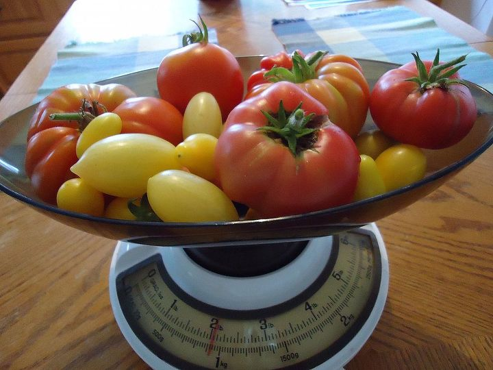 Just a few tomatoes from last years harvest. Looking forward to another great tomato harvest.