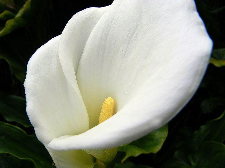 san francisco garden getaway, flowers, gardening, home decor, outdoor living, patio