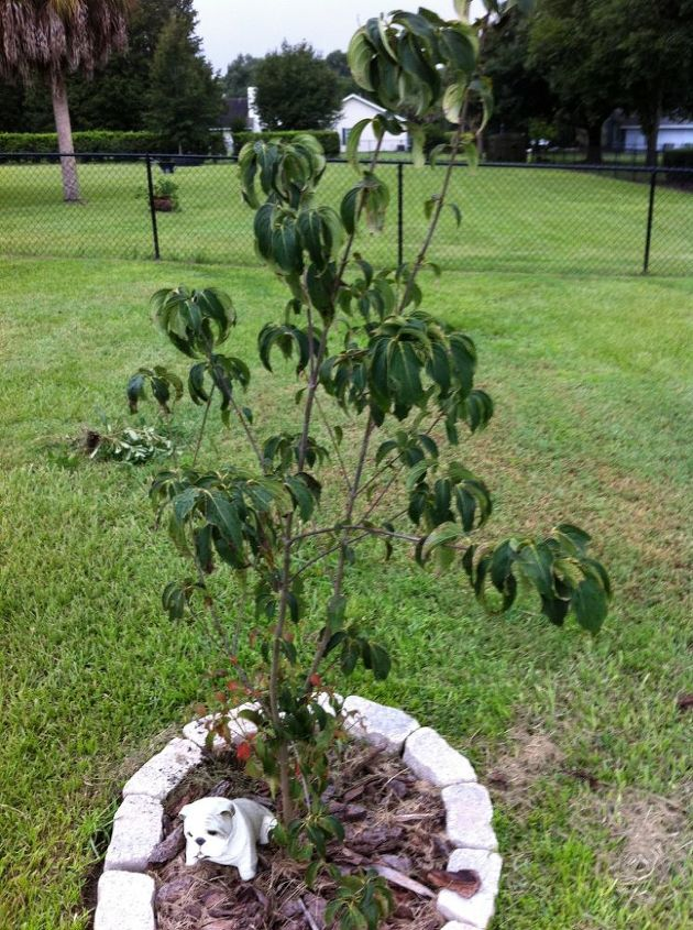 My sick tree :(