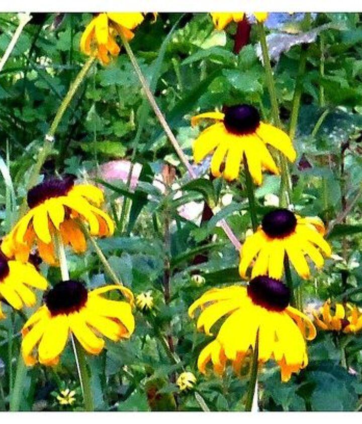 beautiful flowers, flowers, gardening