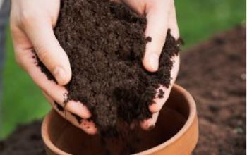 garden tip good soil for beautiful gardens, container gardening, gardening, The difference between good soil and bad soil is visually distinct Good soil is rich and black
