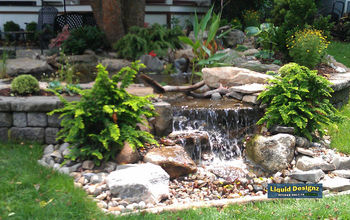 """""""Astonishing transformation"""" of a small, non-functioning Koi Pond ."""