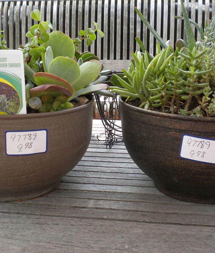 succulent orb experiment, container gardening, flowers, gardening, succulents