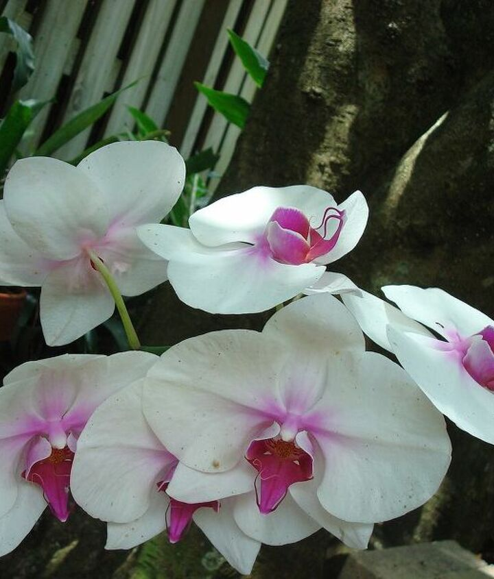 Love my orchids!