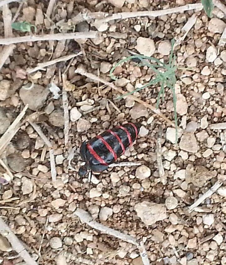 q bug help, gardening, pest control