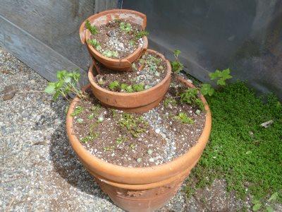 favorite   terracotta clay pots hometalk