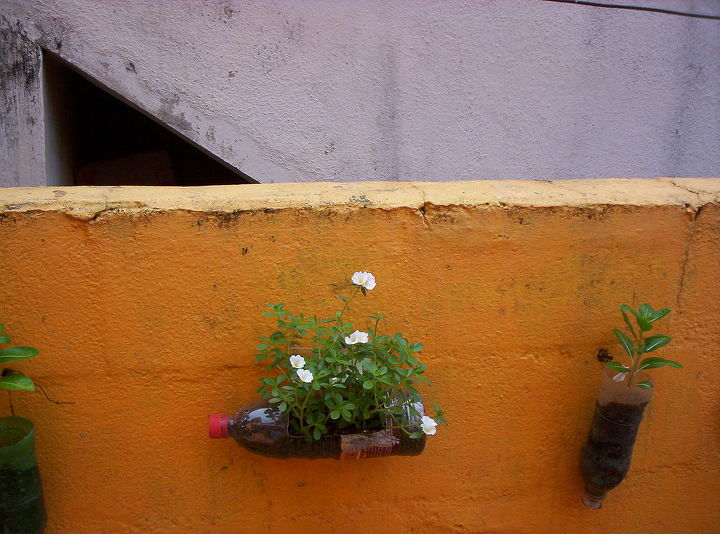 my mini gardens, gardening, go green, homesteading