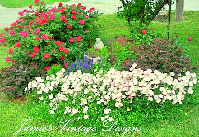 Knock out rose / barberry bush, peonies, pink ladies, Salvia