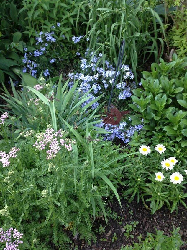 perrenial garden, gardening
