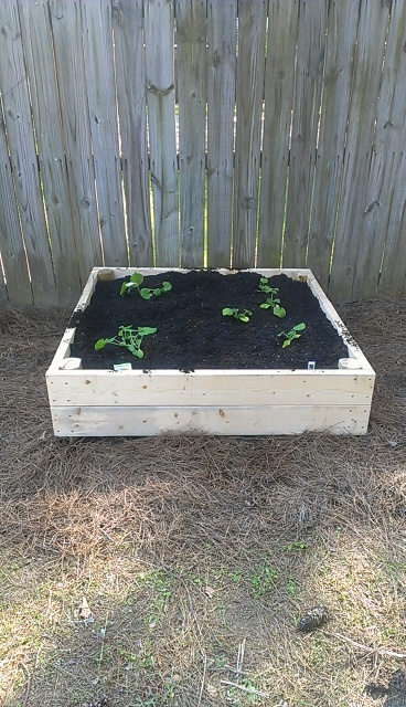 all set up and seedlings planted