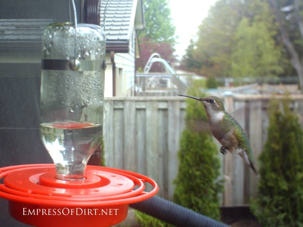 It's hummer time!