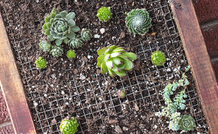 diy vertical succulent planter, crafts, flowers, gardening, succulents, Hens and Chicks