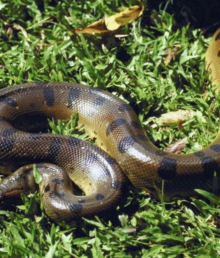 think you have a snake living in your garden, pest control