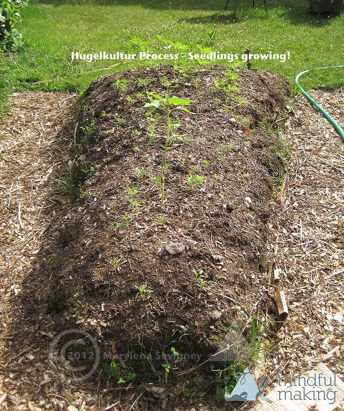 Seedlings emerging!
