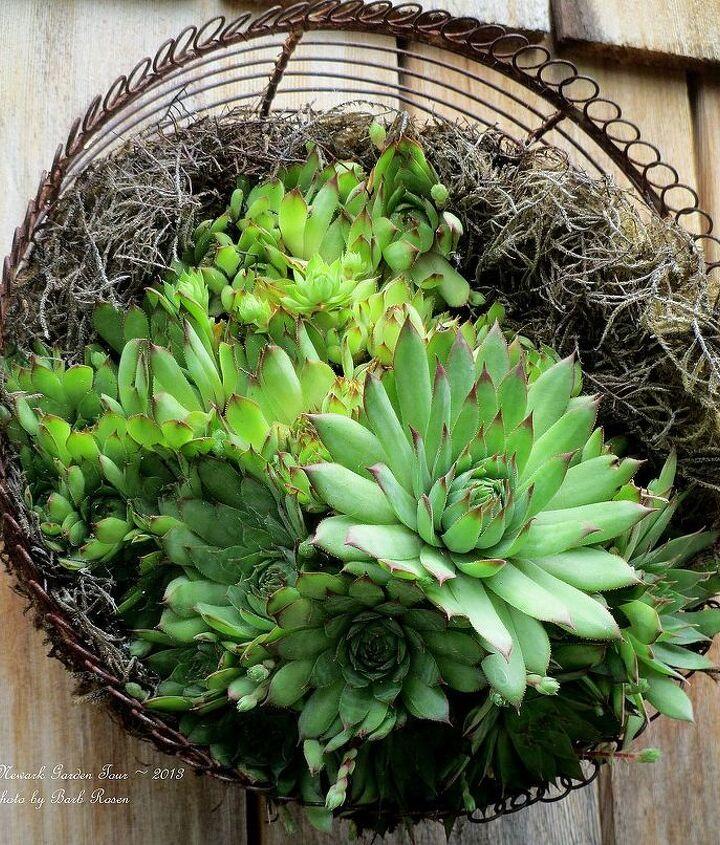 Vertical Succulent Basket