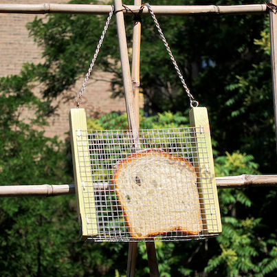 """My """"BLING"""" Feeder was featured on TLLG's FB Page @  https://www.facebook.com/photo.php?fbid=370503789665667&set=a.355589574490422.73015.247917655257615&type=1"""
