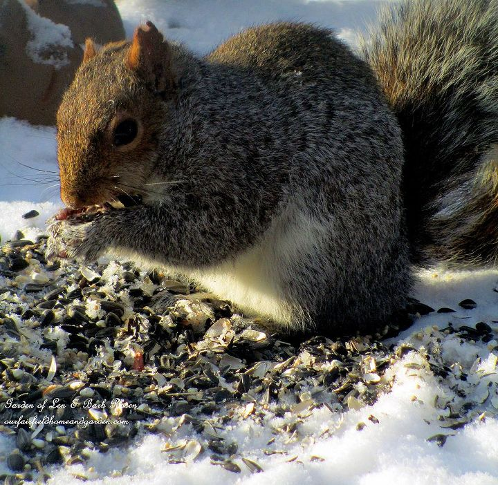 Squirrels have to eat too! And, they are fun to watch!