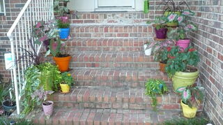 help need shade in texas, flowers, gardening, Painted pots and caladium which are bulbs and do not require as much water