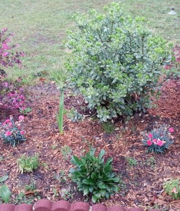 things are looking brighter, gardening, landscape