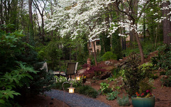 The spring view of the path to our backyard patio at home.  The large dogwoods define the space in the spring.