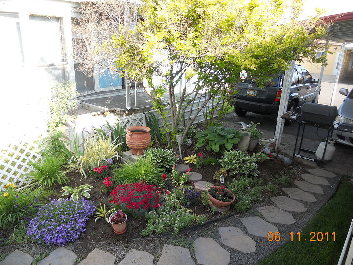 q help with my little garden, flowers, gardening, Last year in bloom until the grass took over and it got so crowded Alyssum fills in every spot bless its heart